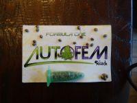 Fem seeds auto formule 1 en auto mega powerplant